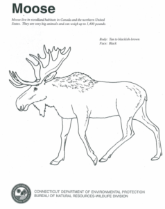 moose track coloring pages - photo#6
