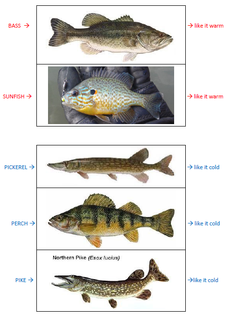 12-2014-SEASONS-fishOnly